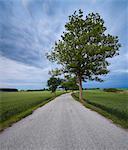 Sweden, Skane, Osterlen, Sarslov, Treelined road in rural landscape