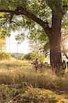 Sweden, Sodermanland, Jarna, Two women and boy (12-17 months) under tree