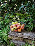 Sweden, Apples in metal basket on stack of stones