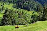Dzembronya Village, Carpathian Mountains, Ivano-Frankovsk Region, Ukraine