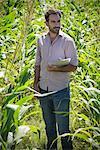 Man examining crops in cornfield