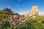 Europe, Italy, Veneto, Veneto, Belluno, Dolomites. Cinque Torri at sunset in the summer with a beautiful flowering of Adenostyles alpina