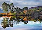 Scotland, Ullapool. Autumn trees reflected in Loch Cul Dromannan north of Ullapool.