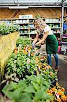 Female florist checking flower in garden centre
