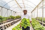 Portrait of worker holding romaine lettuce in Hydroponic farm in Nevis, West Indies