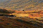 Autumn coloured valley near Malaya Belaya river, Khibiny mountains, Kola Peninsula, Russia
