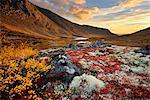 Autumn coloured valley and Malaya Belaya river, Khibiny mountains, Kola Peninsula, Russia