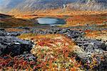 Autumn colours in Malaya Belaya River valley, Khibiny mountains, Kola Peninsula, Russia