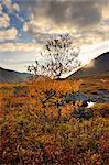 Tree and autumn colours in Malaya Belaya River valley, Khibiny mountains, Kola Peninsula, Russia