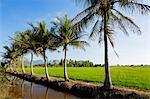 South East Asia, Thailand, Prachuap Kiri Khan, Khao Sam Roi Yot National Park palm trees