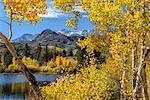USA, California, Eastern Sierra, Bishop, Bishop creek in fall