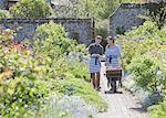 Plant nursery workers pushing wheelbarrow in sunny garden