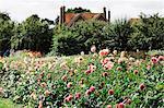 A house and gardens, an organic flower nursery.