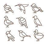 Bird icons, thin line style, flat design