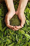 man holding a green tea leaves