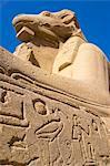 Ram headed Sphinxe, Karnak, Luxor, Egypt