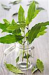 laurel-leaf