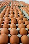 Eggs arranged in egg carton in egg factory