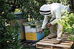 Beekeeper examining beehive box in apiary garden