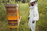 Beekeeper looking at beehive in a field