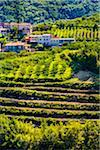Overview of fertile farmland and the village of Brtosici (Bertossici) in the hills near Motovun in Istria, Croatia