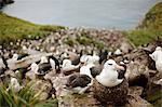 Flock of seagulls resting together on rocky coastline.