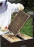A bee-keeper working.