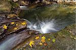 Fall Season at Rock Creek waterfall with fallen Maple Tree leaves in Clackamas Oregon