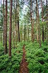 Sweden, Sodermanland, Djurgarden, Path in forest