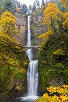 Fall Colors at Multnomah Falls in Columbia River Gorge