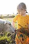Girl feeding sheep in pasture