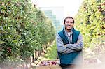 Portrait smiling male farmer harvesting in apple orchard