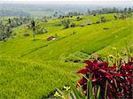 Rice terraces, Bali, Indonesia, Southeast Asia, Asia