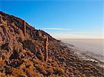 View of Incahuasi Island with its gigantic cacti, Salar de Uyuni, Daniel Campos Province, Potosi Department, Bolivia, South America