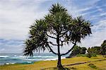 Coastal landscape and Indian Ocean, Reunion Island