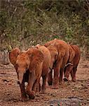 Elephants walking together on path