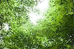 Sun shining through canopy of trees