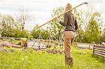 Mature woman, outdoors, gardening, carrying rake, rear view