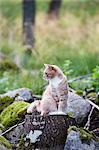 Cat sitting on stump