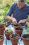 Man planting seedlings in pots