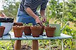 Man planting plants in pots
