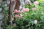 Flowering poppies