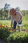 Young woman selecting calendula (calendula officinalis) from flower farm field