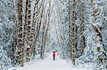 Woman in spruce forest, Bainbridge Island, Washington, US