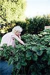 Girl picking strawberries in garden