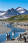 King penguins (Aptenodytes patagonicus) in beautiful scenery, Salisbury Plain, South Georgia, Antarctica, Polar Regions