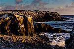 Cliffs of Espanola Island, Galapagos Islands, UNESCO World Heritage Site, Ecuador, South America