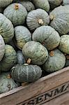 Blue Hokkaido pumpkins