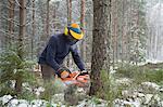 Logger sawing tree, Tammela, Forssa, Finland