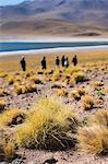 People visiting lake miscanti, San Pedro de Atacama, Chile